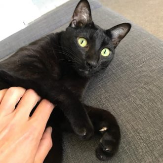 Living with a pet Mental Wellness - Oreo