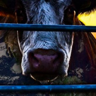 Cowspiracy Review
